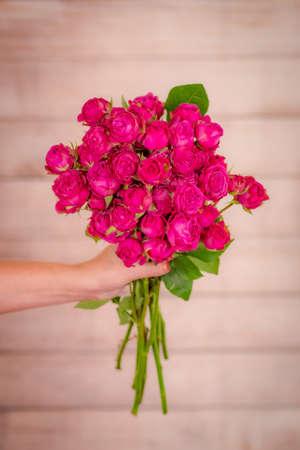 Women hand holding a bouquet of Classic Sensation roses variety, studio shot. Banque d'images