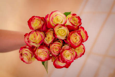A bouquet of Her Majestic roses variety, studio shot, dual tone flowers. High quality photo Banque d'images