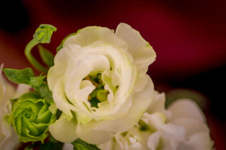 Close up of a bouquet of Pink Mondial roses variety, studio shot, pink flowers Banque d'images