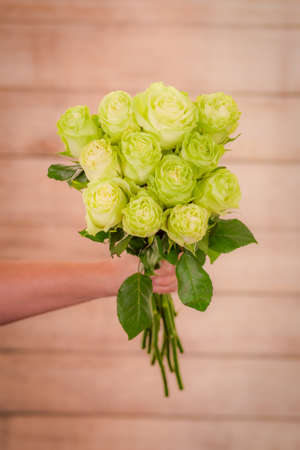 Women hand holding a bouquet of Wasabi roses variety, studio shot, green flowers