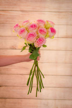 Women hand holding a bouquet of Esperance roses variety, studio shot, pink flowers Banque d'images