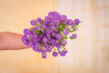 A bouquet of Astee Blue Summer flowers variety, studio shot, purple flowers.