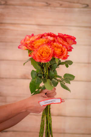 Women hand holding a bouquet of Free Spirit roses variety, studio shot, orange flowers Banque d'images