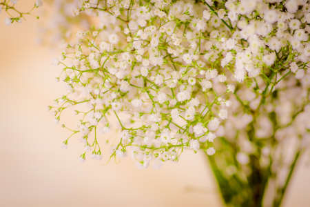 Close up of a bouquet of Lismachia foliage variety, studio shot, white flowers