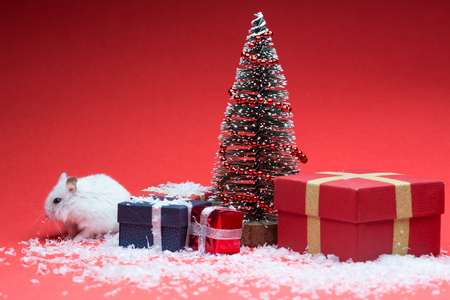 Cute hamster on red background with christmas tree and gifts and snow