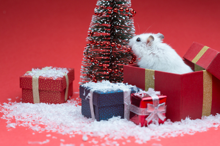 Cute christmas hamster inside gift box near christmas tree Stock Photo