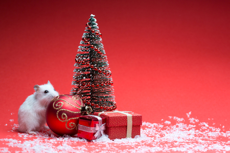 Cute hamster on red background with christmas tree and gifts and snow Stock Photo