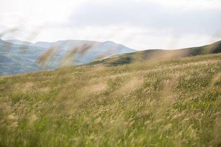 Beautiful summer meadow nature. Spring and summer flowers under blue sky and sunlight near Shemakha, Azerbaijan.
