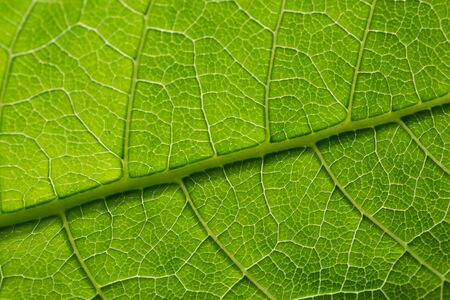 Green leaf pattern, natural background. Green natural background, visible leaf texture.