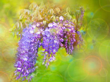 ittle: ittle purple flowers on a green background