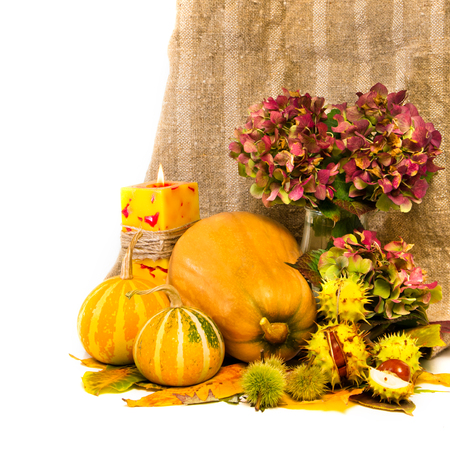 Harvested pumpkins with fall leaves, flowers and candle, chestnut, over white  photo