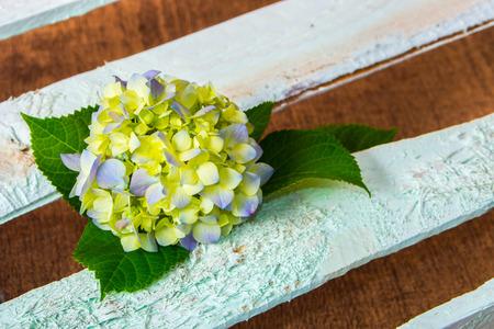 compliment: fresh hydrangea flower on wooden boards