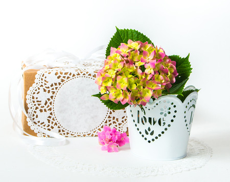 felicitation: hydrangea in a pot with a gift box as a present for a holiday Stock Photo