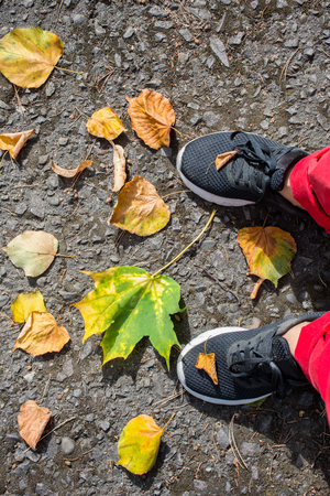 legs in black sneakers and red pants on the asphalt with fallen autumn foliage.