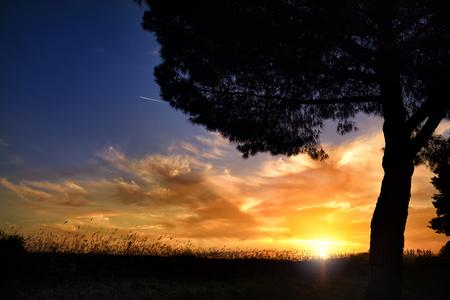 Sunset, summer evening blue sky cloud sun tree