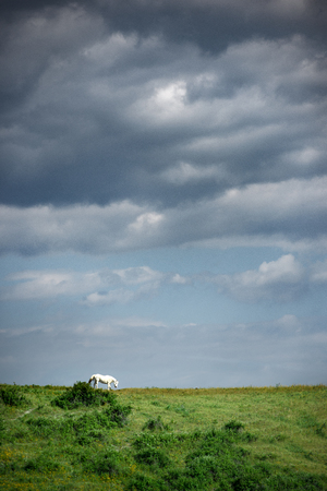 Horse on a green meadow against the sky