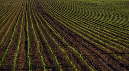 fertile land: fertile field, crops, arable land