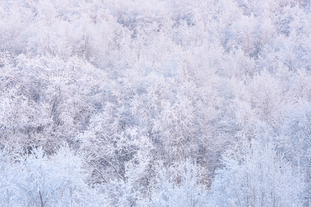 winter forest. trees in the snow texture