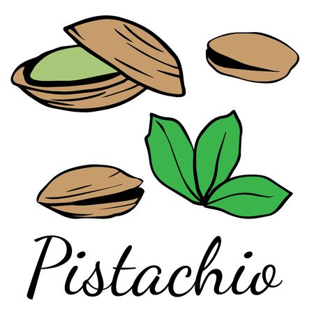 Doodle sketch pistachio on white background, cartoon drawing of nuts Illustration