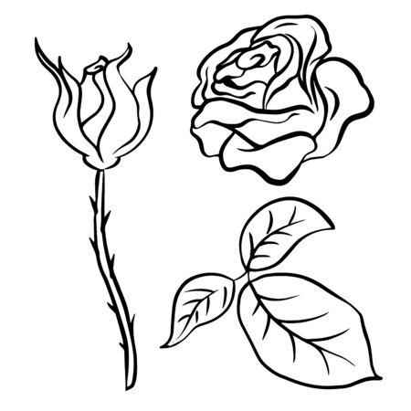 Doodle sketch rose, flower and leaf bud illustration on white background
