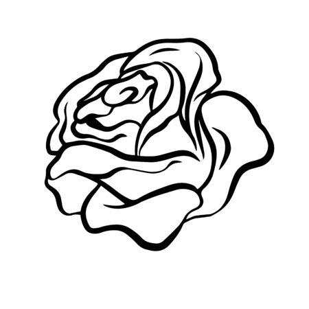 Doodle sketch rose, flower bud illustration on white background Stock Illustratie