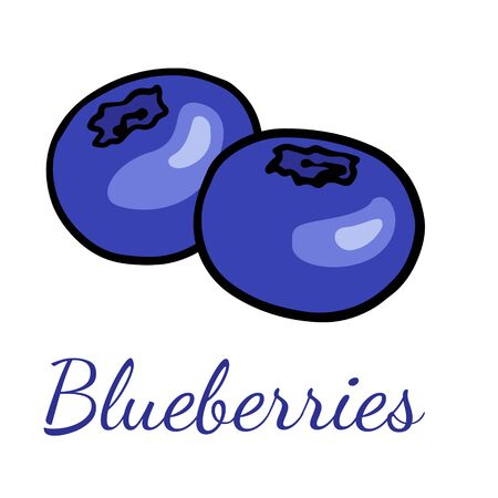 Doodle blueberry sketch, hand drawn illustration of berries on a white background. Ilustracja