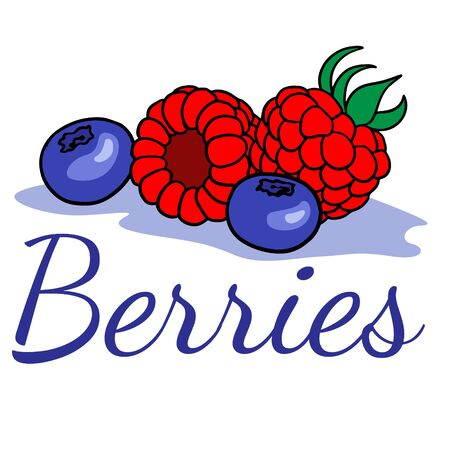 doodle sketch of berries, illustration of raspberries and blueberries on a white background