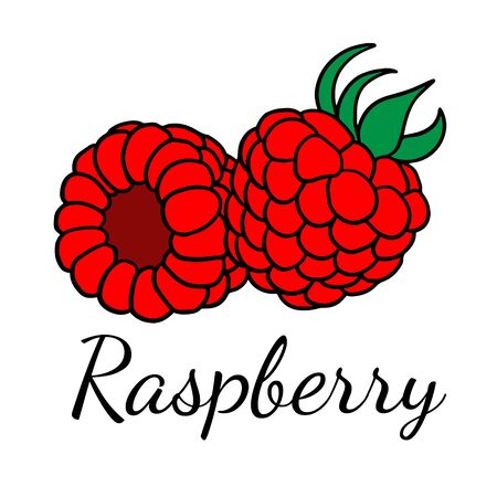 Doodle sketch raspberries, hand drawn berries illustration on white background