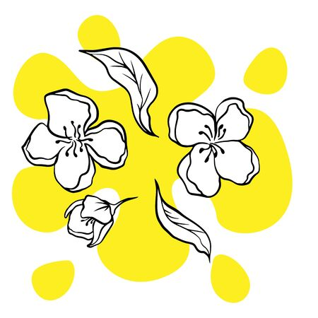 doodle sketch jasmine flowers on a white background, illustration of blooming flowers