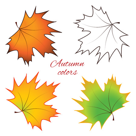color separation: Bright autumn maple leaves