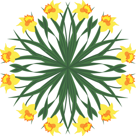Circle from yellow narcissus Ilustracja