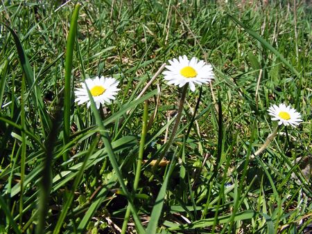 neat: Meadow flowers and plants in natural conditions in the sunlight