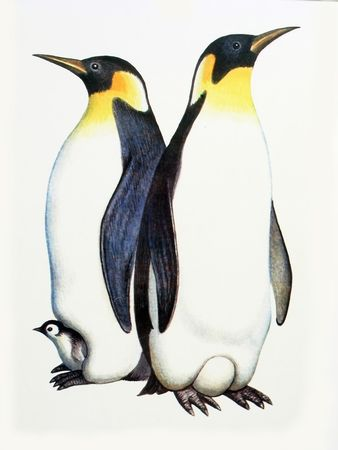 floe: Drawing on the paper family penguins - male, female and nestling