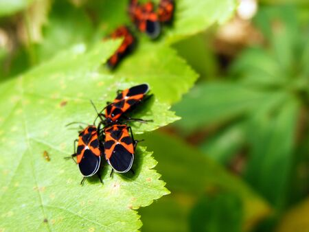 With insects on the green leaves of the plant on a sunny day Stock Photo