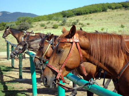 Horses stand in a stall in the open air on a background of blue sky and green meadow Stock Photo
