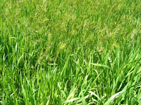 Background on the young green grass of different species on a sunny day Stock Photo