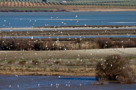 observe: Laguna de Fuente de Piedra is excellent place to observe birds native