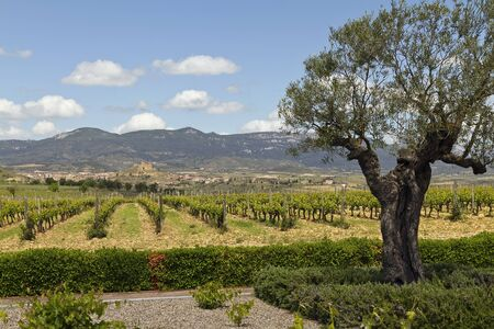 Panoramic view of the spectacular River Ebro Valley and the surrounding plantations of grapevines