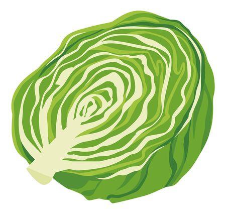 Illustration of lettuce (half) Vektoros illusztráció