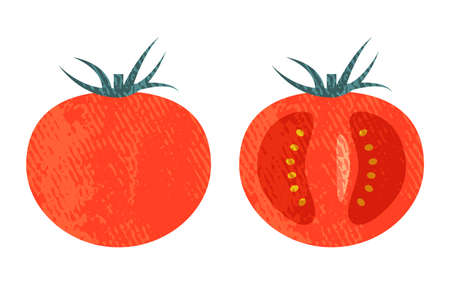 Acrylic-style tomatoes and cross-sections