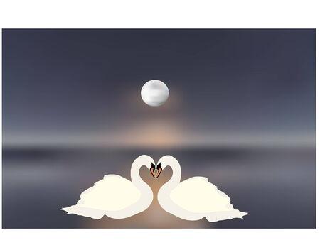 swan pair: swan couple in love