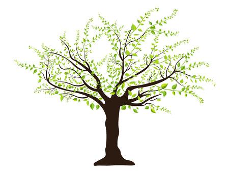 arbre vert avec des feuilles