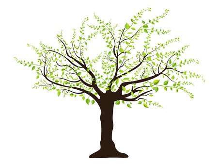 photosynthesis: green tree with leaves Illustration