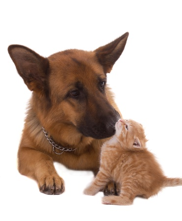 dog and his friend cat photo