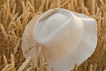 hat on the wheat field photo
