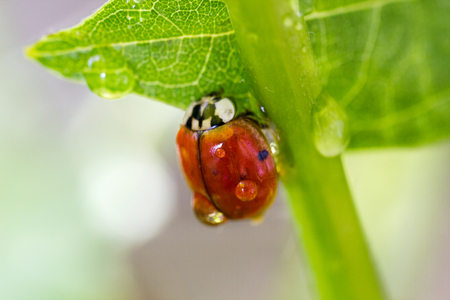ladybug on a green stalk close up photo