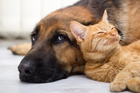 クローズ アップ、猫および犬の一緒に床に横たわってください