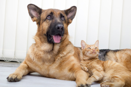 close up  cat and dog together lying on the floor photo