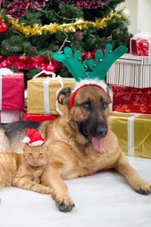 dog and cat in Christmas night photo