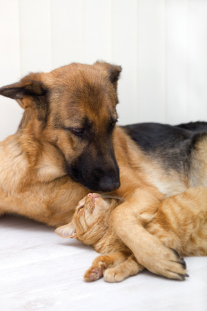 cat and dog together lying on the floor  photo